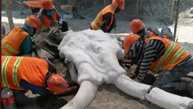 Photo of Encuentran restos de más de 60 mamuts en Santa Lucía