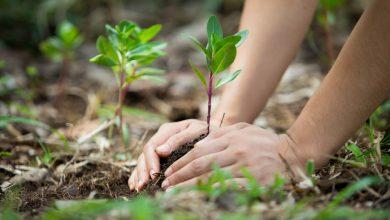 Photo of INAH fomenta el cuidado del medio ambiente en los más pequeños