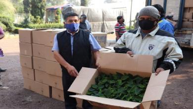 Photo of En medio de la pandemia,  Xochimilco inicia el cultivo de nochebuena
