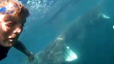 Photo of Surfista sobrevive a encuentro con 20 tiburones y lo graba en video