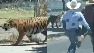 Photo of Captan a hombre atrapando con un lazo a un tigre en Jalisco #VIDEO