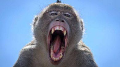Photo of Mono alcohólico enloquece y lastima a personas por no tener más bebida