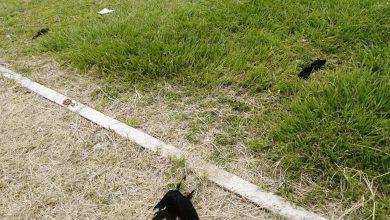 Photo of Aparecen muchas aves muertas en Coatepec; vecinos preocupados