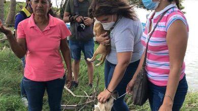 """Photo of Hasta 2 años de prisión a quien abandone perros en """"La isla"""" de Alvarado"""