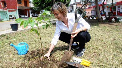 Photo of Diputada Ana Miriam rinde homenaje a los papás plantando un cedro