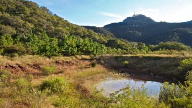 Photo of PT pide reconsiderar recorte a Comisión de Áreas Naturales Protegidas
