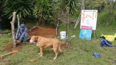 Photo of Hacen composta con heces de perro en parques de Xalapa