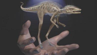 Photo of Estudio revela que dinosaurios pudieron ser diminutos en sus orígenes