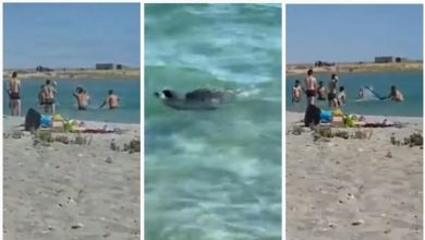 Photo of Turistas golpean con palos a una foca para que niños se tomen fotos #Video