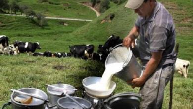 Photo of Exigen a SADER y Lucinda pagar a $8.20 el litro de leche a productores pequeños