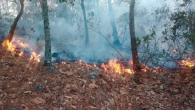 Photo of Lluvias de días pasados ayudan con sequía y riesgos de incendios forestales: PC