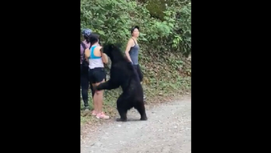 Photo of VIDEO: Oso sorprende a jóvenes en Chipinque, Nuevo León