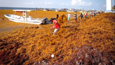 Photo of IPN analiza ya motivos del incremento del sargazo en el Caribe mexicano