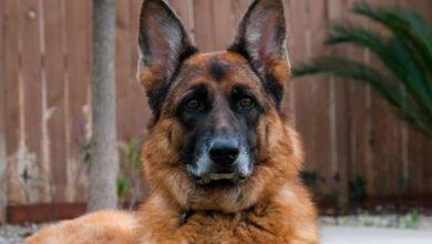 Photo of Fallece el primer perro diagnosticado con covid-19