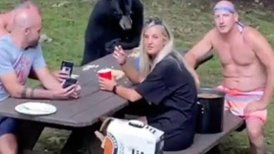 Photo of Oso hambriento se une a un picnic familiar #Video