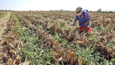 Photo of Campo mexicano se hunde en desventaja competitiva por falta de incentivos