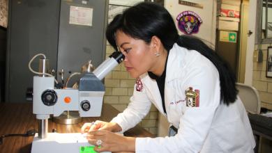 Photo of Investigadores descubren 4 nuevas especies de hongos en Cozumel