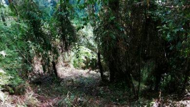Photo of Campesinos invaden terrenos privados y amenazan a locales