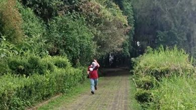 Photo of Reportan ataque de abejas africanizadas en el Macuiltépetl