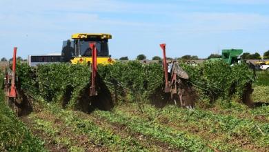 Photo of Piden a la Cámara de Diputados más recursos al agro