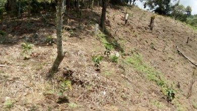 Photo of Existen 4 carpetas de investigación por daños ambientales y despojo en bosque de Coatepec