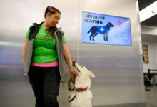 Photo of Aeropuerto usa perros para detectar coronavirus en Finlandia