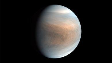 Photo of ¿No estamos solos? Hay posible vida en Venus