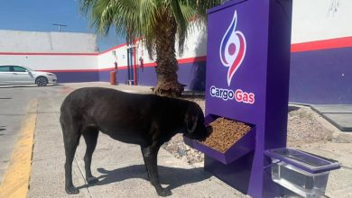 Photo of Gasolinera se hace viral por alimentar perritos de la calle