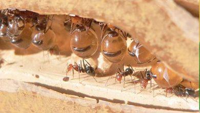 Photo of En Singapur abren tienda que vende hormigas como mascotas