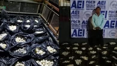 Photo of Arrestan a hombre con 30 mil huevos de tortuga en Oaxaca