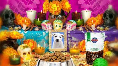 Photo of ¿Sabías que hay Día de Muertos para mascotas?