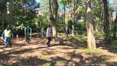 Photo of Realizan jornada de mantenimiento en el parque La Señoría