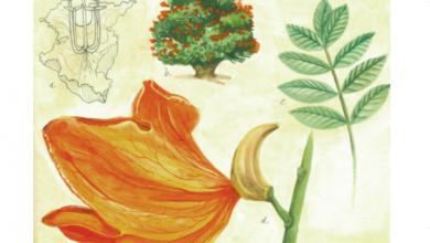 Photo of Presenta IVEC Bitácora vegetal, infografías de las especies de flora del JEX