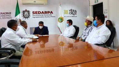 Photo of Opera Sedarpa ocho campañas fitozoosanitarias en beneficio de los Sistemas-Producto