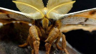 Photo of ¡Tarántula con alas! El animal real que asusta en México