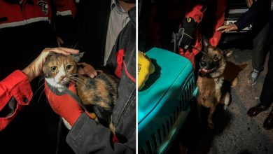 Photo of Perrito salva a gato de entre escombros en el terremoto de Turquía; el video es viral