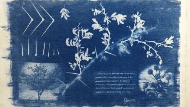 Photo of IVEC publica catálogo digital de infografías sobre especies vegetales