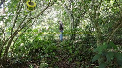 Photo of Joven es hallado colgado de un árbol