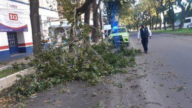 Photo of Atiende PC municipal afectaciones  por fuertes vientos en Xalapa