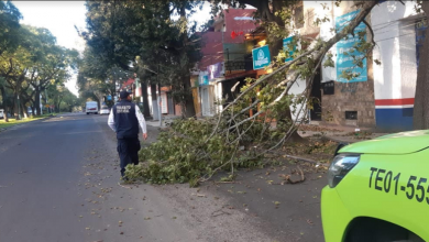 Photo of Dejan árboles y postes caídos fuertes vientos en Xalapa