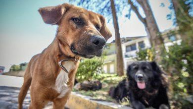 Photo of Detectan puntos con más animales en situación de calle