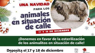 """Photo of Anuncian campaña """"Navidad para los animales en situación de calle"""""""