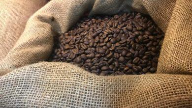 Photo of Veracruz aporta 24.4 por ciento de la cosecha nacional de café