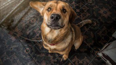Photo of 5 formas de poder ayudar a los perritos de la calle
