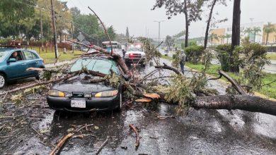 Photo of Anegamientos, árboles caídos y deslaves dejan lluvias