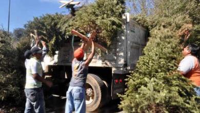 Photo of Árboles de Navidad reducen vida útil de relleno sanitario