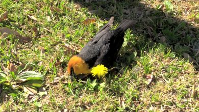 Photo of Preocupación por pájaros muertos en Durango