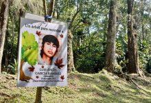 Photo of Continúa siembra de árboles en memoria de desaparecidos