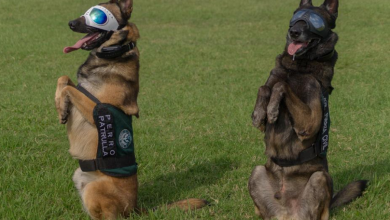 Photo of Veracruz, sede de Diplomado Internacional Táctico K-9, Perros Multipropósito